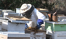Brother Blaise Heuke with his hives at Prince o...