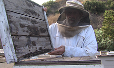 Brother Blaise with his hives at Prince of Peac...