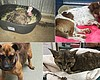 Pets Lost In Lilac Fire Waiting To Be Claimed