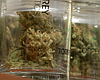 San Diego Cannabis Stores Brace For New Year's High