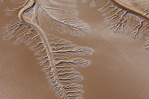 For A Few Weeks The Colorado River Reached The Ocean. Wil...