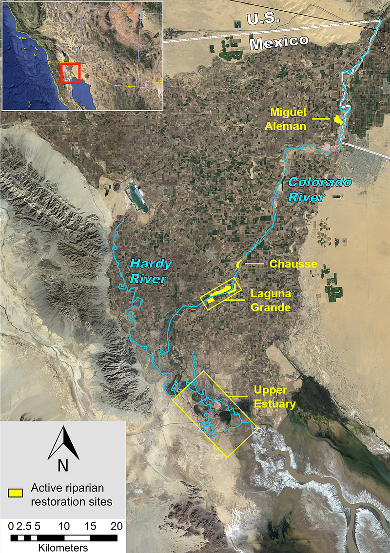 For A Few Weeks The Colorado River Reached The Ocean Will It Happen