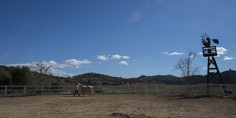 A trainer with HiCaliber Horse Rescue works with a horse at the nonprofit's V...