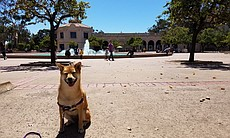 Balboa Park, 145 citations. A dog sits by the f...