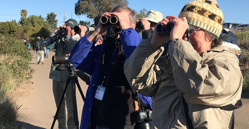 A group of birders on a tour look through binoculars at a California thrasher...