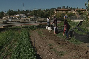City Heights Youth Garden Helps Grow Job Skills