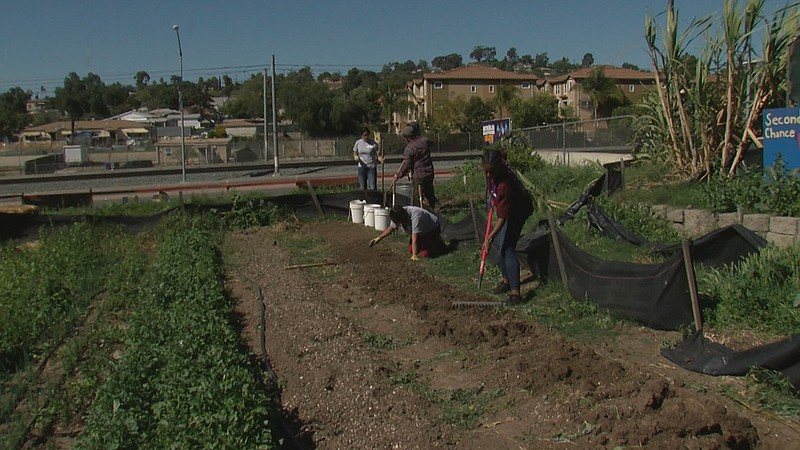 City heights youth garden helps grow job skills kpbs for Wish garden deep lung