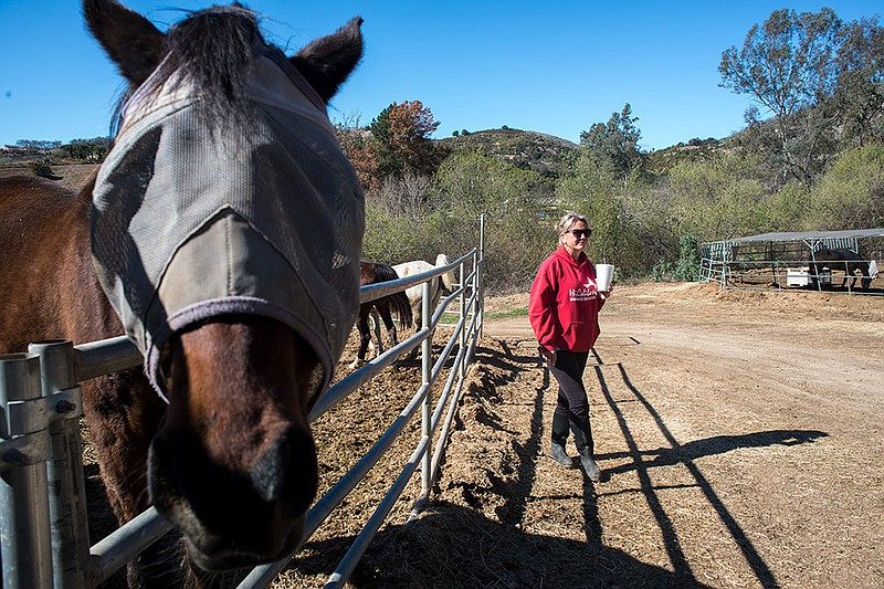 HiCaliber Horse Rescue board member Robyn Armstrong walks the property, Feb. ...