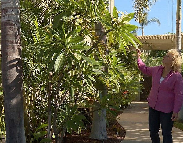 Host Nan Sterman shows plumeria in a garden landscape.