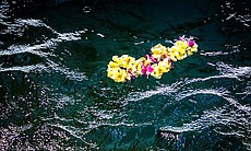 Hawaiian lei floating in the ocean. Narrated by...