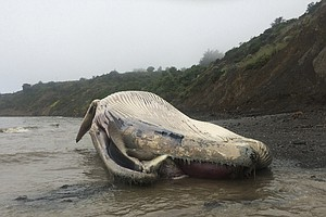 Third Dead Whale In A Week Washes Ashore In California