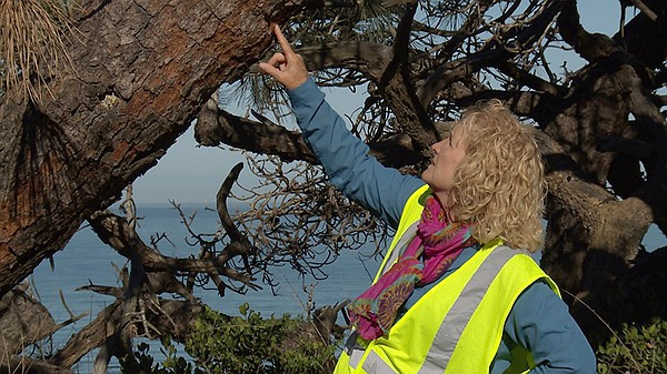 Host Nan Sterman examines the bark of a tree at Torrey Pi...