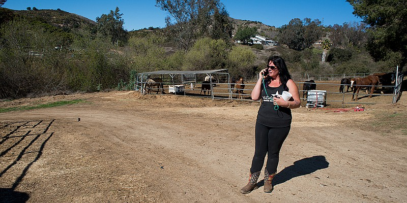 HiCaliber Horse Rescue's founder, Michelle Knuttila, gave a tour of the Valle...