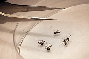 Photo for County's First West Nile Virus Case Confirmed By Health Officials