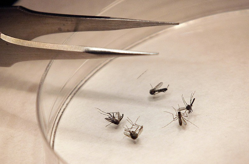 Burlington mosquitoes test positive for West Nile virus