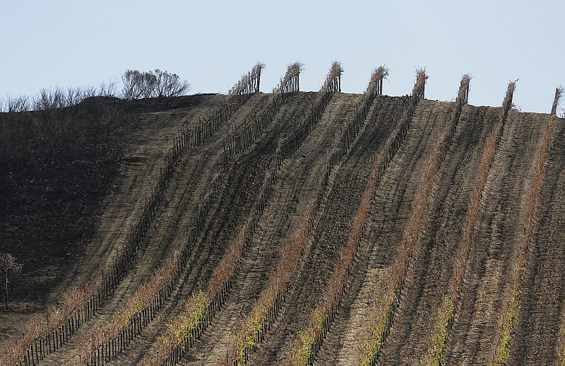 In this photo taken Monday, Oct. 30, 2017, a partially burned vineyard is see...