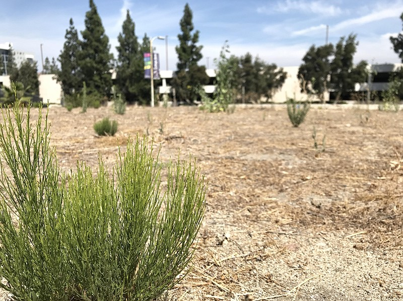 A plant is seen in the foreground of a vacant lot near SDSU where a developer...