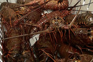 Most Lobsters Caught In San Diego Wind Up On Chinese Plates