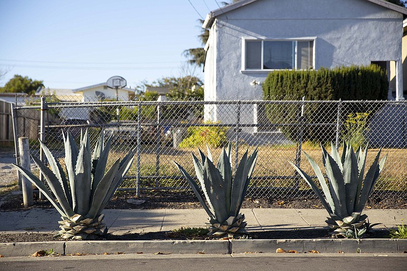 Tree plants in front of North Oakland house are shown in this undated photo.