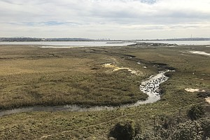 Photo for Mission Bay Wetland Project Moves Forward