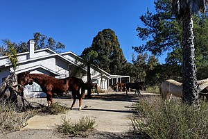 Photo for HiCaliber Horse Rescue Evicted From Valley Center Ranch