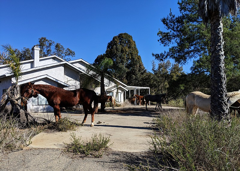 HiCaliber Horse Rescue, after being evicted from its Valley Center ranch on D...