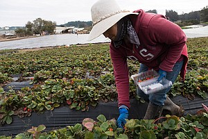 Photo for California's Next-Gen Farmers Look To Nonprofit Groups For Business Coaching