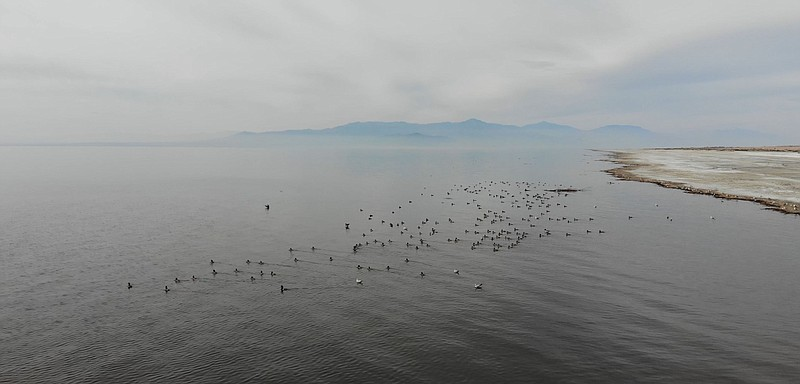 Waterfowl rest in the placid waters of the Salton Sea on Feb. 25, 2019.