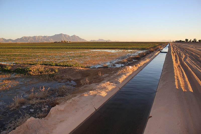 Water from the Colorado River flows through an irrigation canal at an alfalfa...