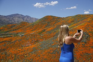 Photo for California City To Shut Car Access To 'Super Bloom' Area