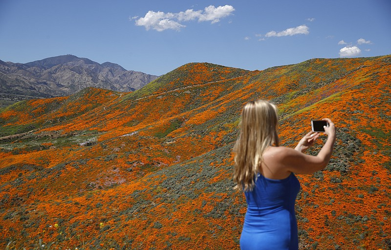 Renee LeGrand, of Foothill Ranch, Calif., takes a picture among wildflowers i...