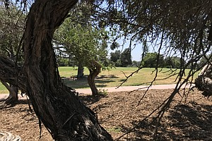 Volunteers Use Arbor Day To Increase Balboa Park's Tree P...