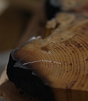 Cross section of tree ring at the Laboratory of Tree-Ring Research at University of Ariz.