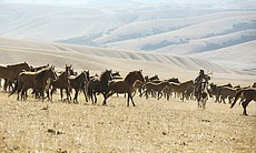 Wild horse herds and Yamnaya riders, Central As...