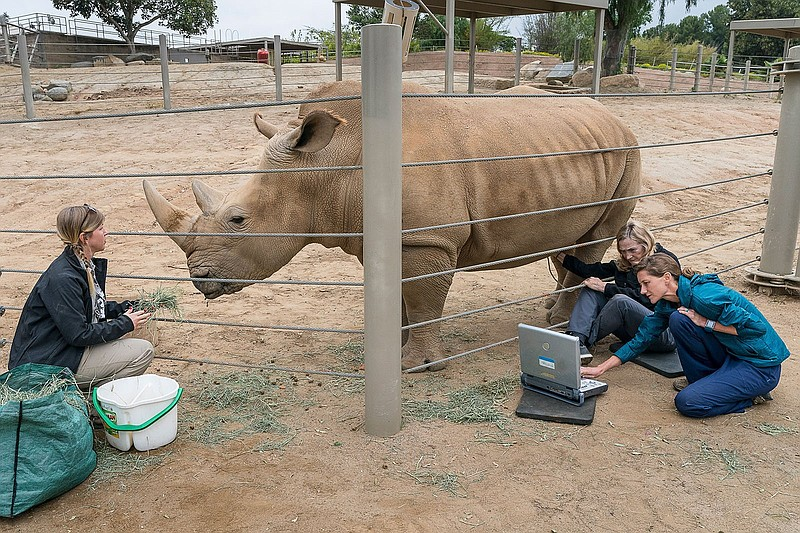 Barbara Durrant and Parker Pennington give the southern white rhino Victoria ...