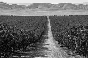 Photo for Mark Arax: Chasing The Water And Dust Behind The California Dream
