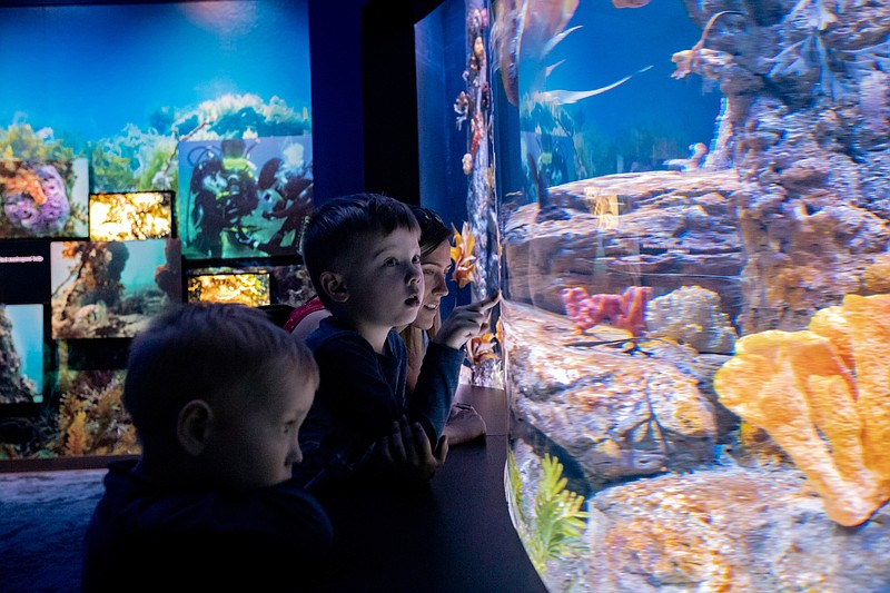 Two children and their guardian look on at the sea dragon exhibit at the Birc...