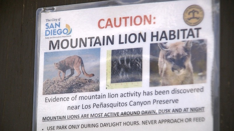 A sign warning parkgoers of mountain lion activities in the Los Peñasquitos C...