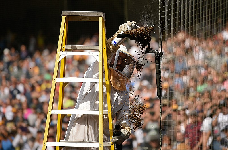 Trent Polcyn sprays a bee swarm on a microphone on the field which caused a d...