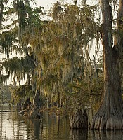 The Atchafalaya Swamp in La., fed by the Mississippi, is the largest swamp in the United States.