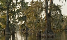 The Atchafalaya Swamp in La., fed by the Missis...
