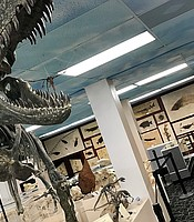 A dinosaur on display at the  Roynon Museum of Earth Sciences and Paleontology, June 28, 2019.