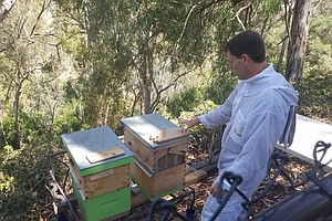Beehive Invention Looks To Backyard Beekeepers To Save Dy...