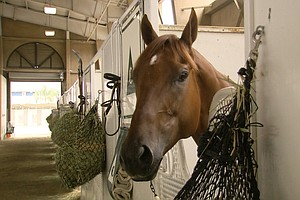 2 Horses Die In 'Freak Collision' During Training At Del ...
