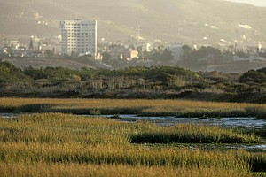 Local Environmental Groups Oppose Tijuana River Valley Ca...