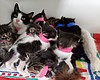 An 11-kitten litter is pictured at the San Dieg...
