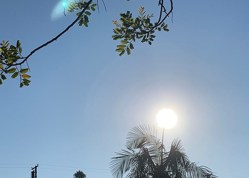 Sun shining through a palm tree in this undated photo.