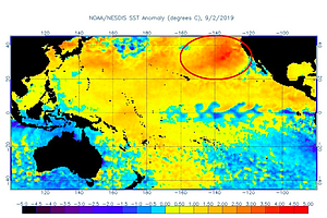 Photo for Marine Heat Wave Off West Coast Could Prove Destructive To Sea Life