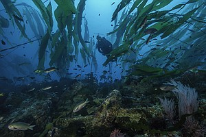 Research Shows California's Marine Sea Life Reserves Are ...
