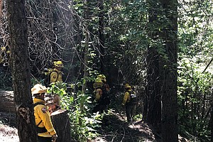 Controlled Burns Aim To Reforest San Diego's Mountains